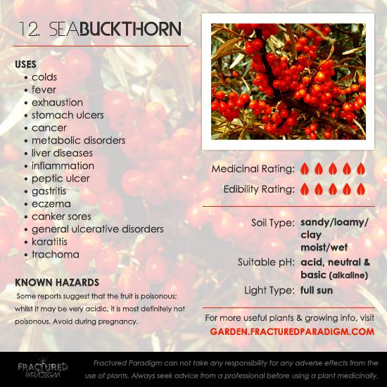 Sea Buckthorn Medicinal Uses